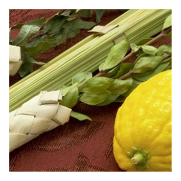 Picture for category Sukkot Gifts